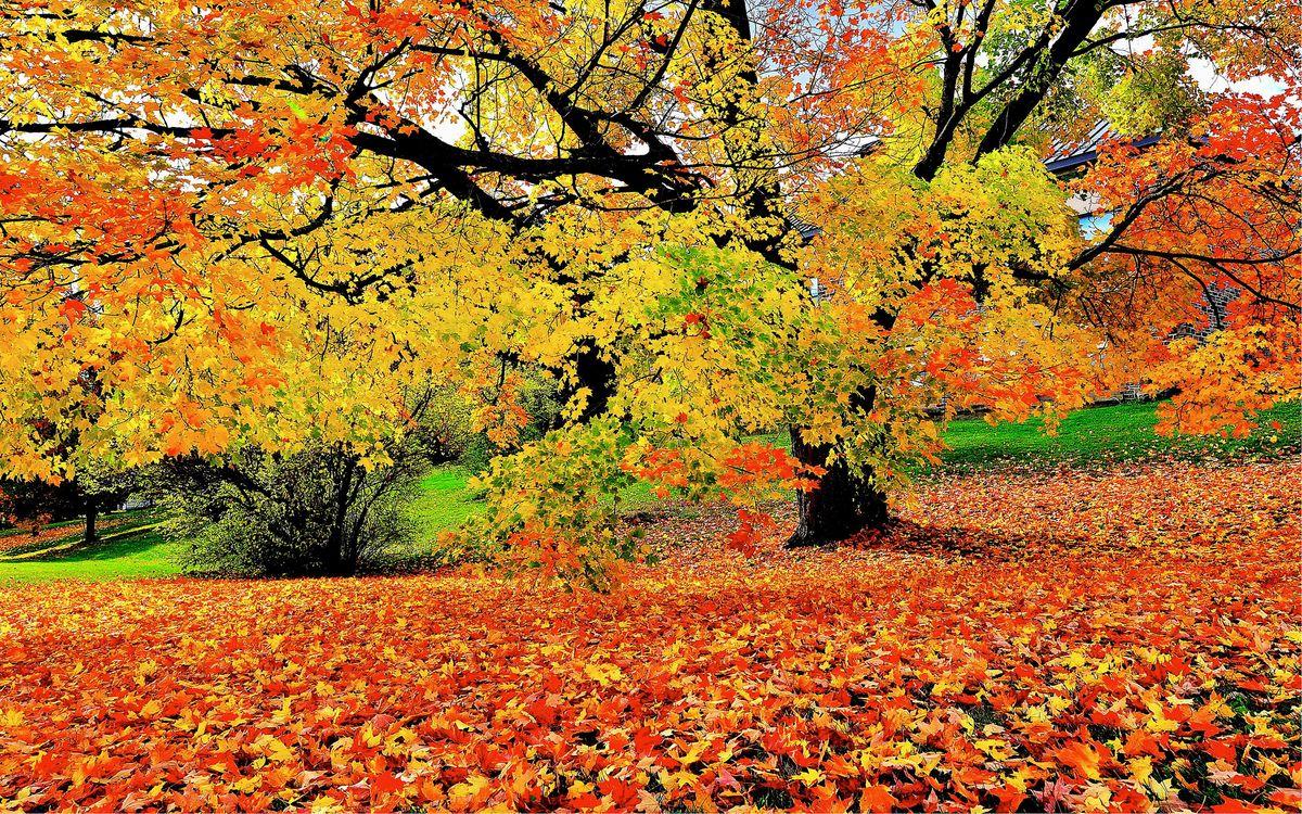 Обои деревья, осенние цветы, осенние листья картинки на телефон