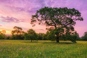 Photo free sunset flower valley, field, trees