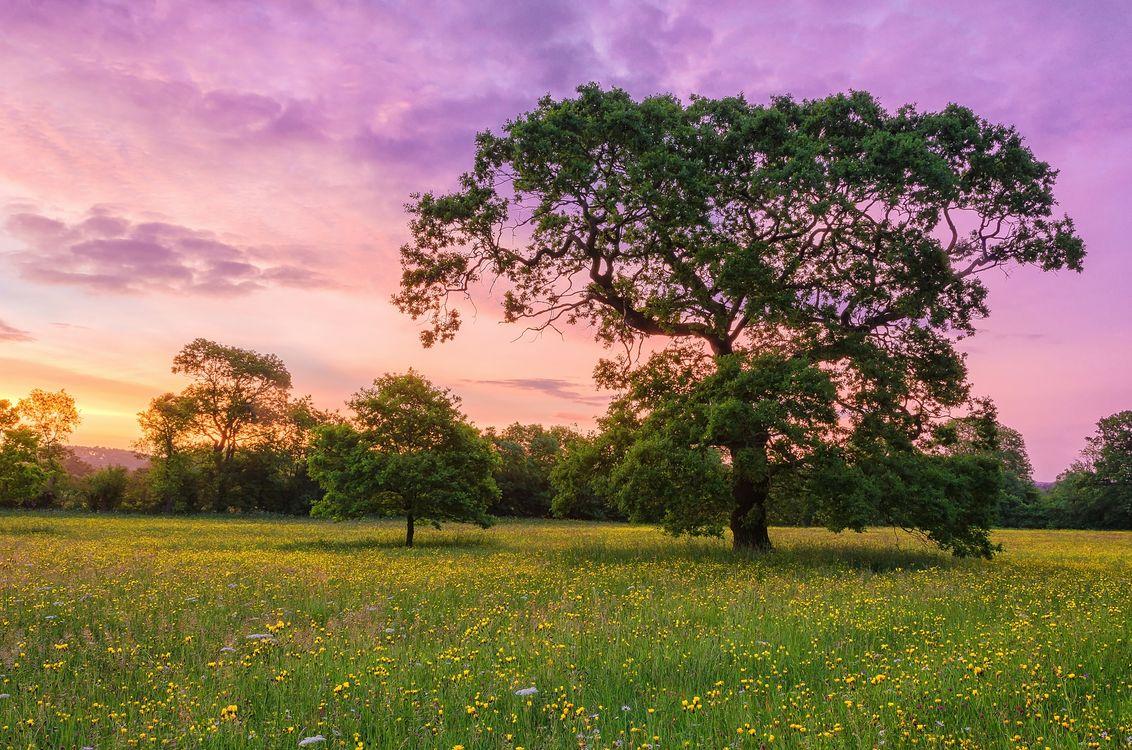 Фото бесплатно закат, цветочная долина, поле - на рабочий стол