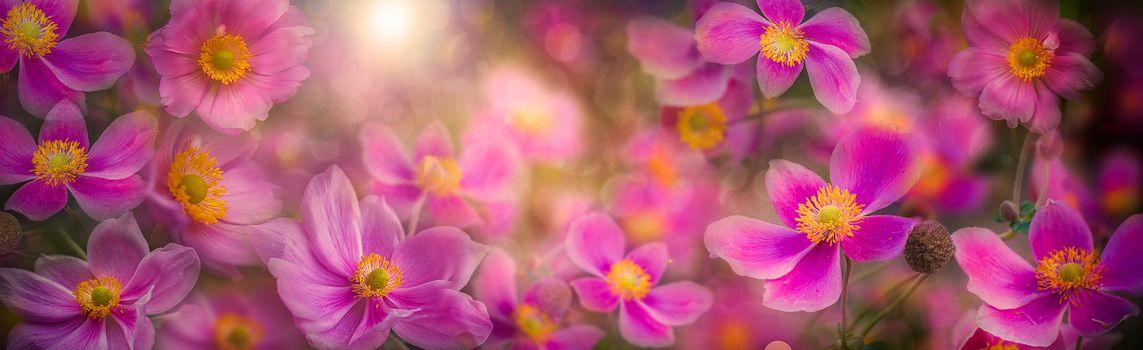 Photo free anemones, flowers, floral arrangement