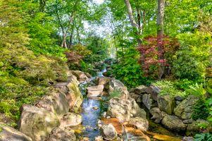 Бесплатные фото лес,деревья,парк,речка,ручей,водоём,камни