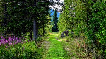 Фото бесплатно лесная дорога, лес, деревья