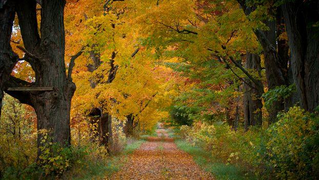 Заставки осень, лес, деревья, дорога, осенние листья, осенние краски, природа, пейзаж
