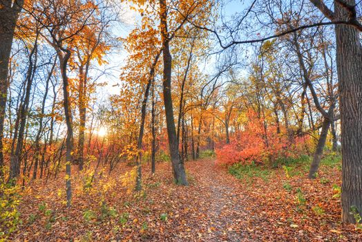 Photo free trees, path, autumn leaves