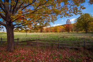 Photo free autumn, field, trees