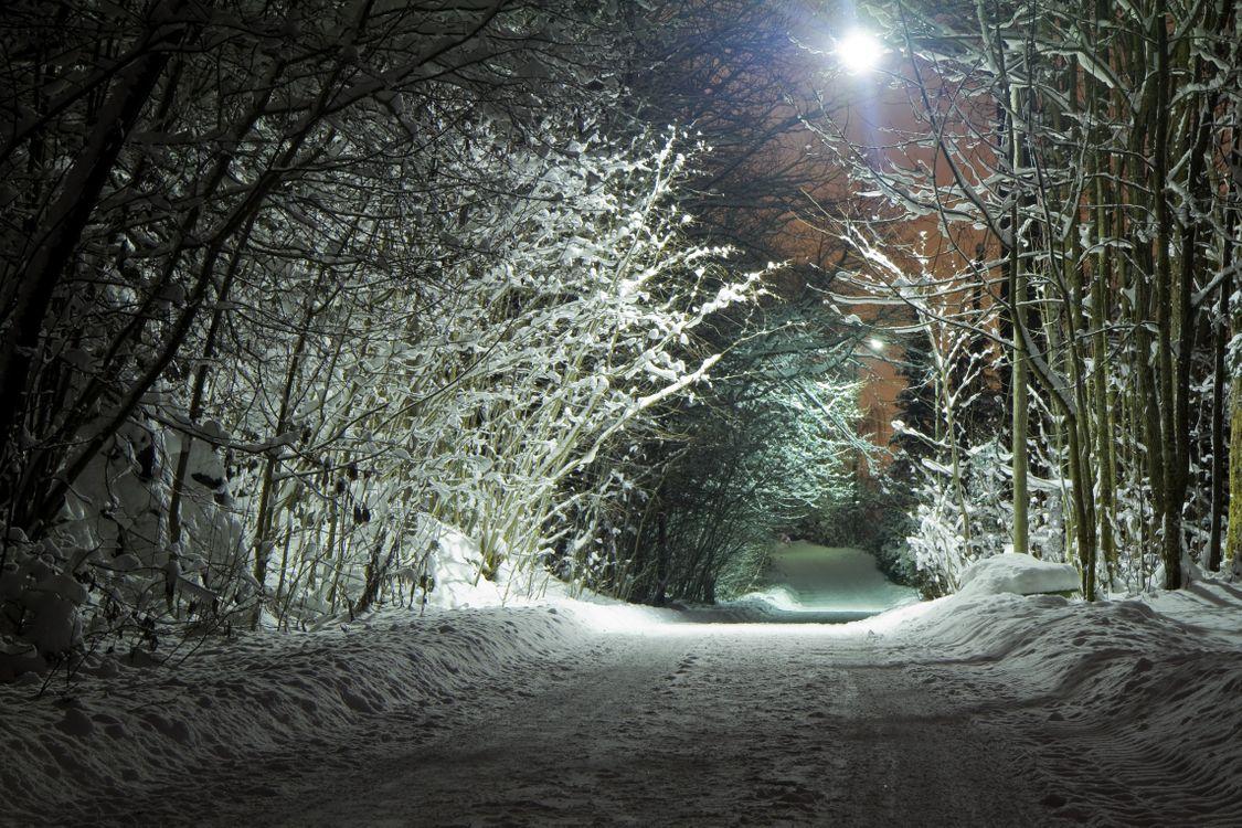 Фото бесплатно зима, ночь, дорога, деревья, фонари, иллюминация, снег, лес, природа, освещение, пейзаж, пейзажи