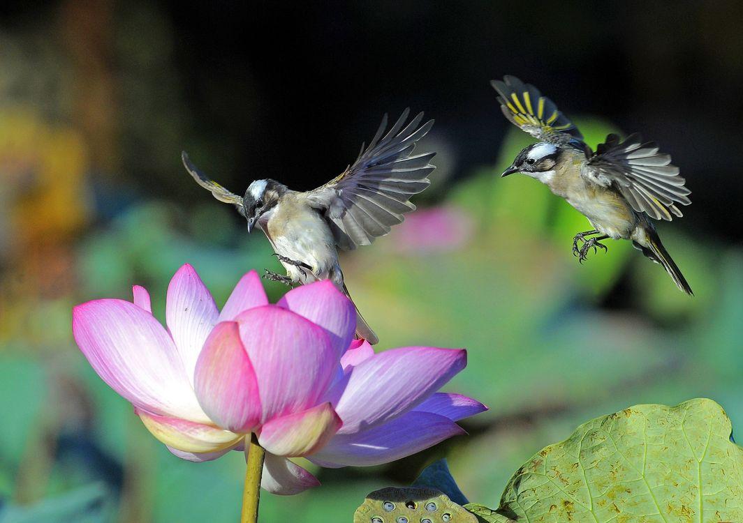 Фото бесплатно колибри, цветок, перья - на рабочий стол