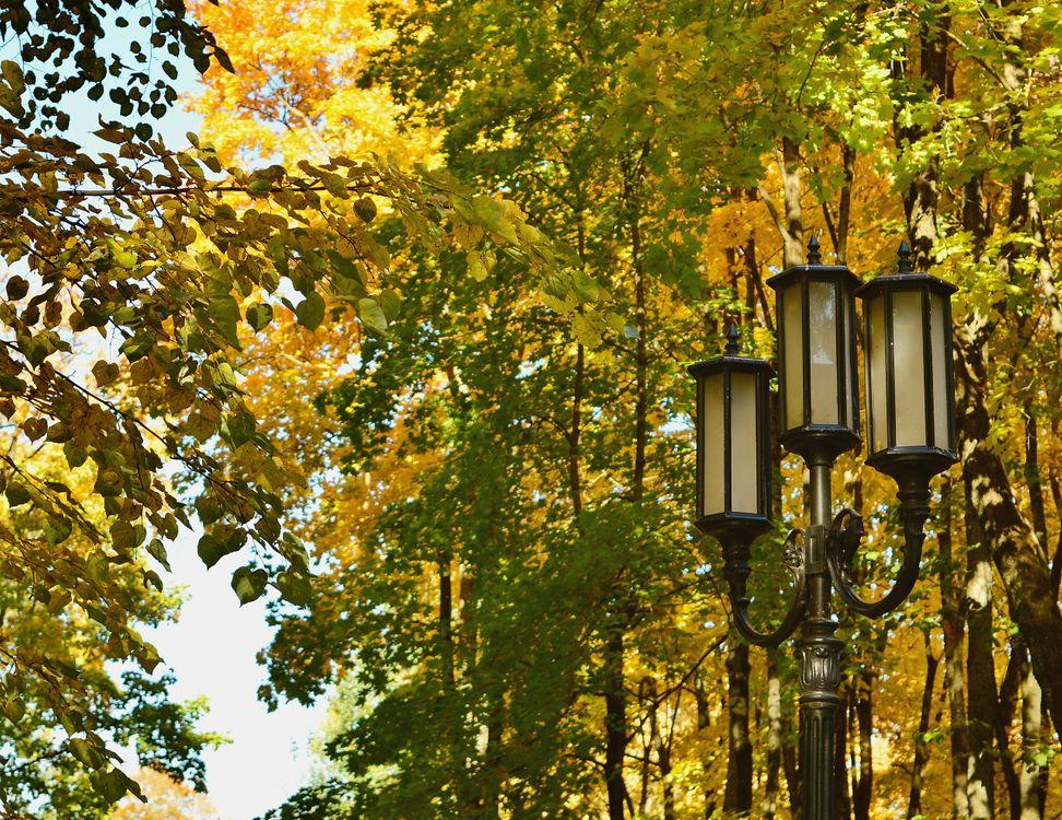Фото бесплатно Осень, фонарь, город, парк, деревья, природа
