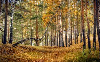 Заставки осень, лес, деревья, парк, осенние краски, краски осени, осенние листья, осенний лес, пейзаж