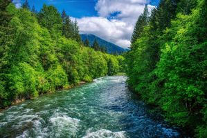 Photo free CISP river near mount St Helens, Washington, forest