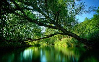 Заставки Река, деревья, красивый день