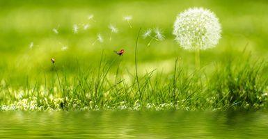 Фото бесплатно трава, вода, одуванчик