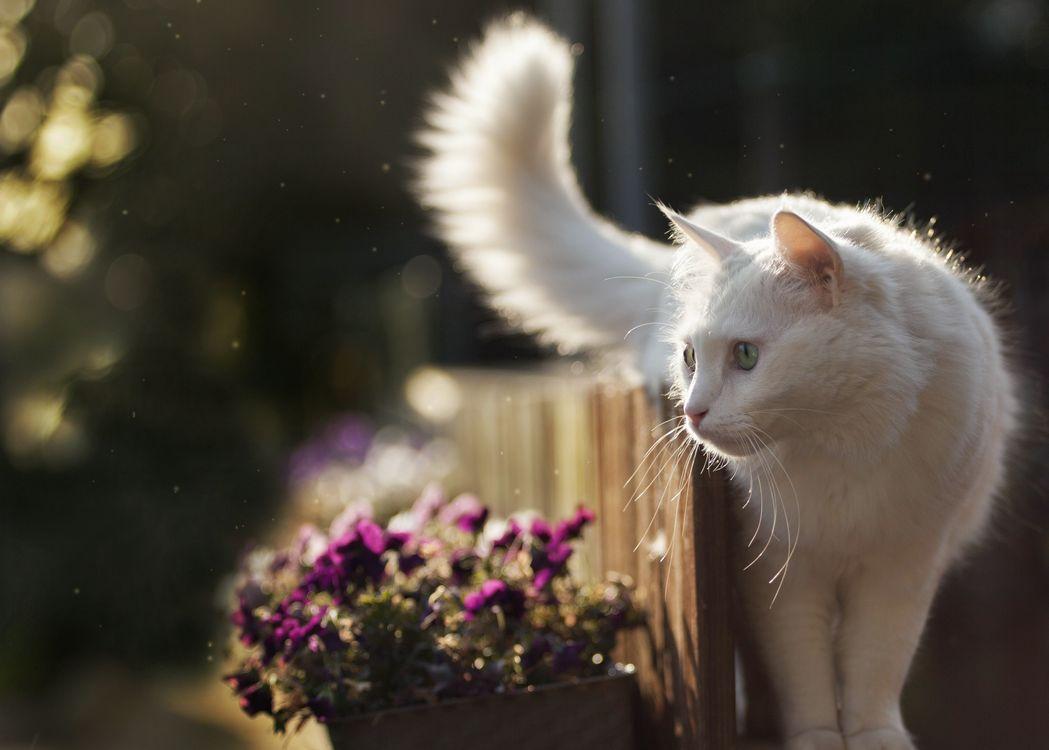 Белый кот у клумбы · бесплатное фото