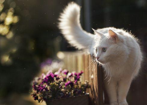 Белый кот у клумбы