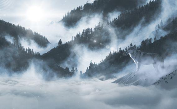Фото бесплатно волк, дикий, лес