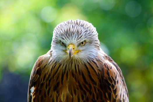 Photo free hawk, feathers, beak