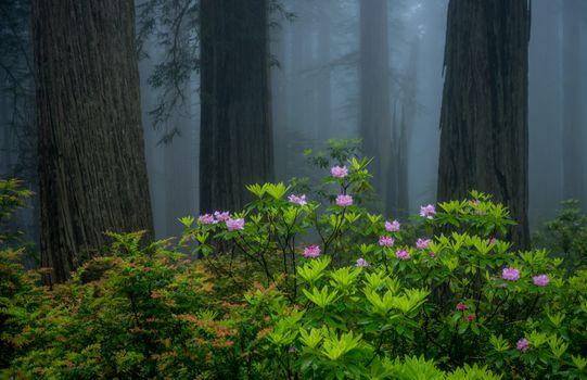 Фото бесплатно лес, деревья, туман, кусты, цветы, природа