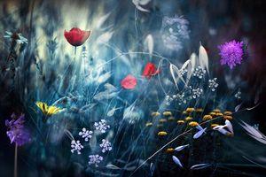 Фото бесплатно манипуляции, цветы, растения