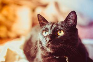 Бесплатные фото кот,котенок,черный,глаза,усы,уши,бакенбарды