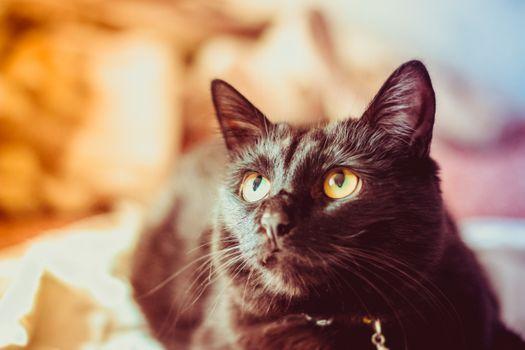 Заставки кот,котенок,черный,глаза,усы,уши,бакенбарды,от маленьких до средних кошек,млекопитающее,кошачьих,глаз,нос