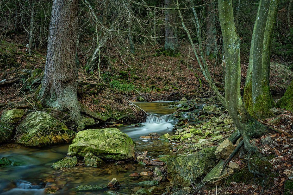 Обои лес, деревья, речка, ручей, камни, водопад, природа картинки на телефон