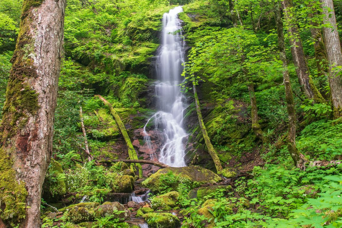 Обои Little Fall Branch Falls, Pisgah National Forest, North Carolina картинки на телефон