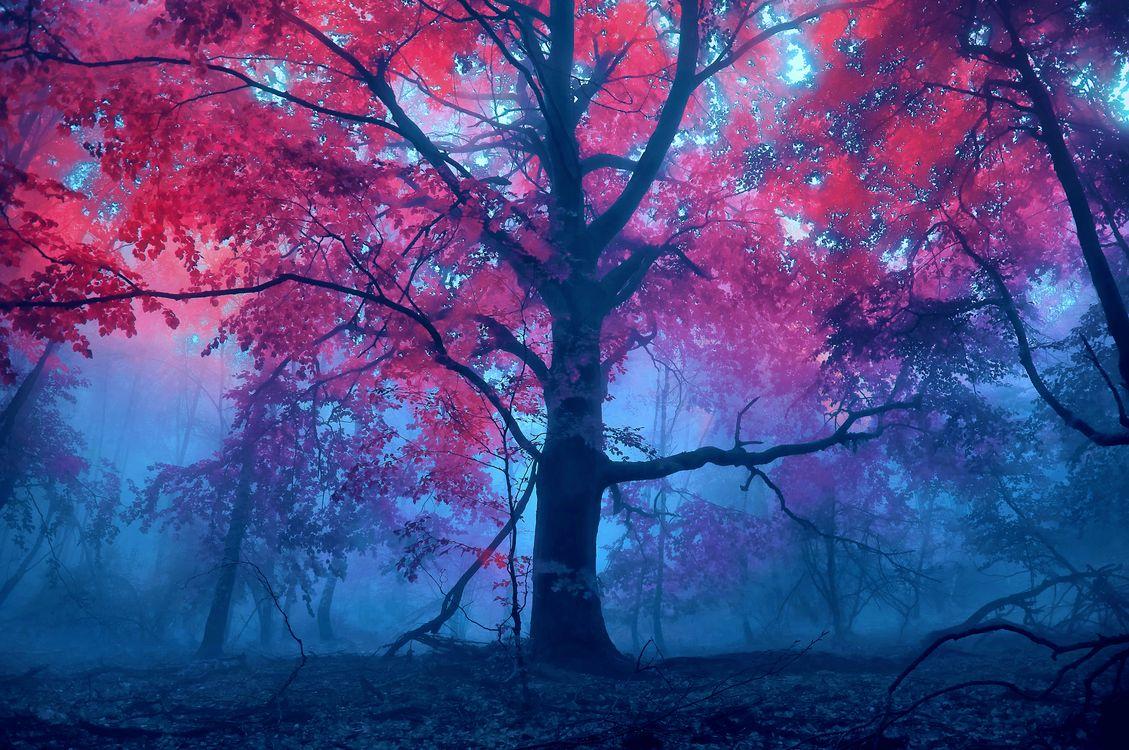 Обои туман, лес, осенние краски картинки на телефон