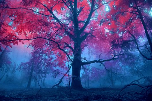 Photo free fog, forest, autumn colors
