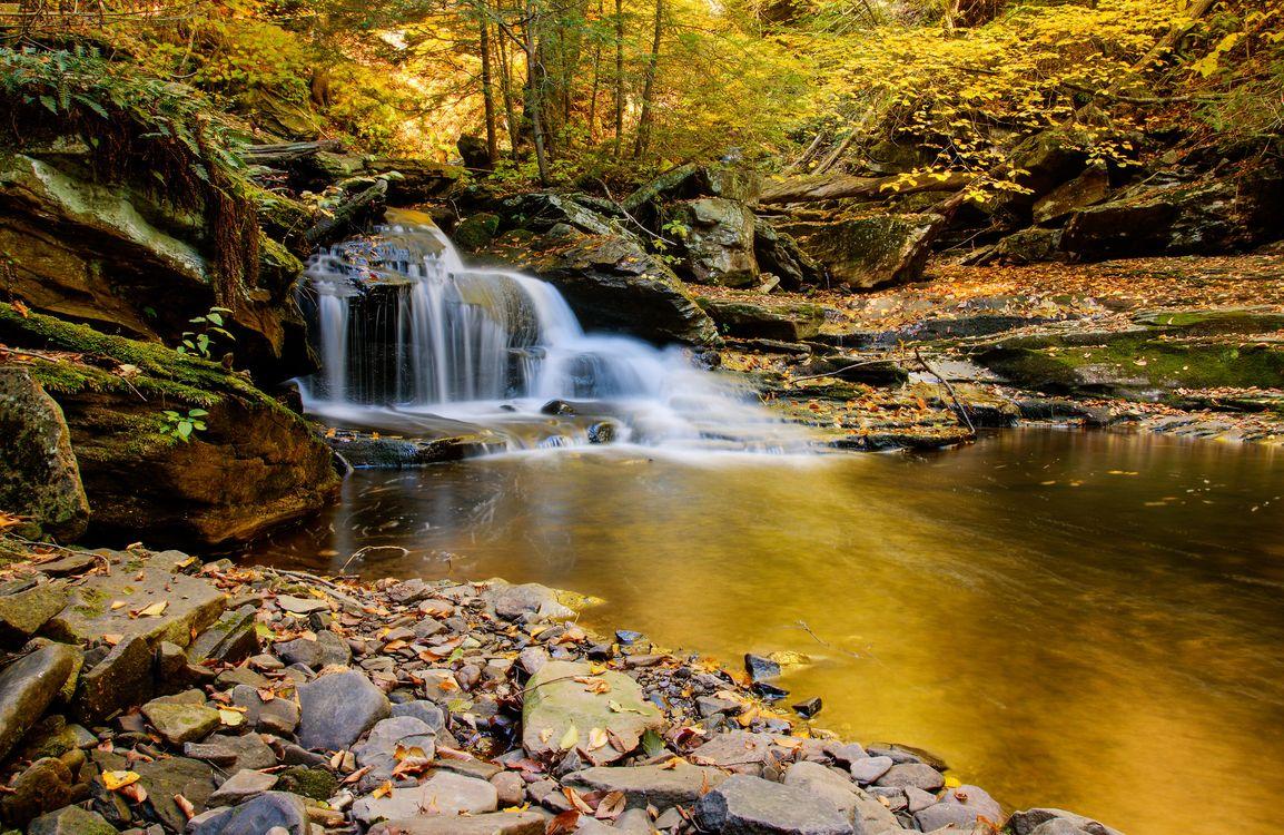 Обои осень, деревья, природа картинки на телефон