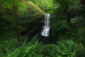 Бесплатные фото Silver falls state park,лесной водопад,лес,деревья,водопад,природа,пейзаж