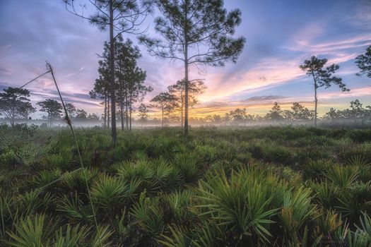 Photo free Misty dawn, Split, Orlando