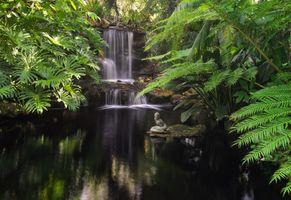 Фото бесплатно Водопад Селби-Гарденс, штат Флорида, окружен тропическими растениями, парк, водоём, водопад, тропики, природа, пейзаж