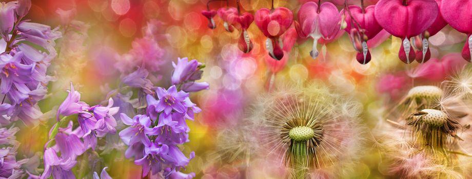 Фото бесплатно одуванчик, макро, флора