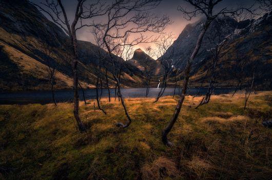 Горы и голые деревья · бесплатное фото