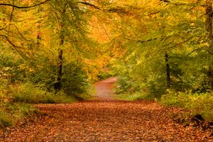 Заставки краски осени, осенние листья, природа