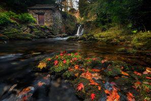 Осенний пруд · бесплатное фото