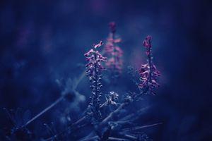 Фото бесплатно природа, трава, растения