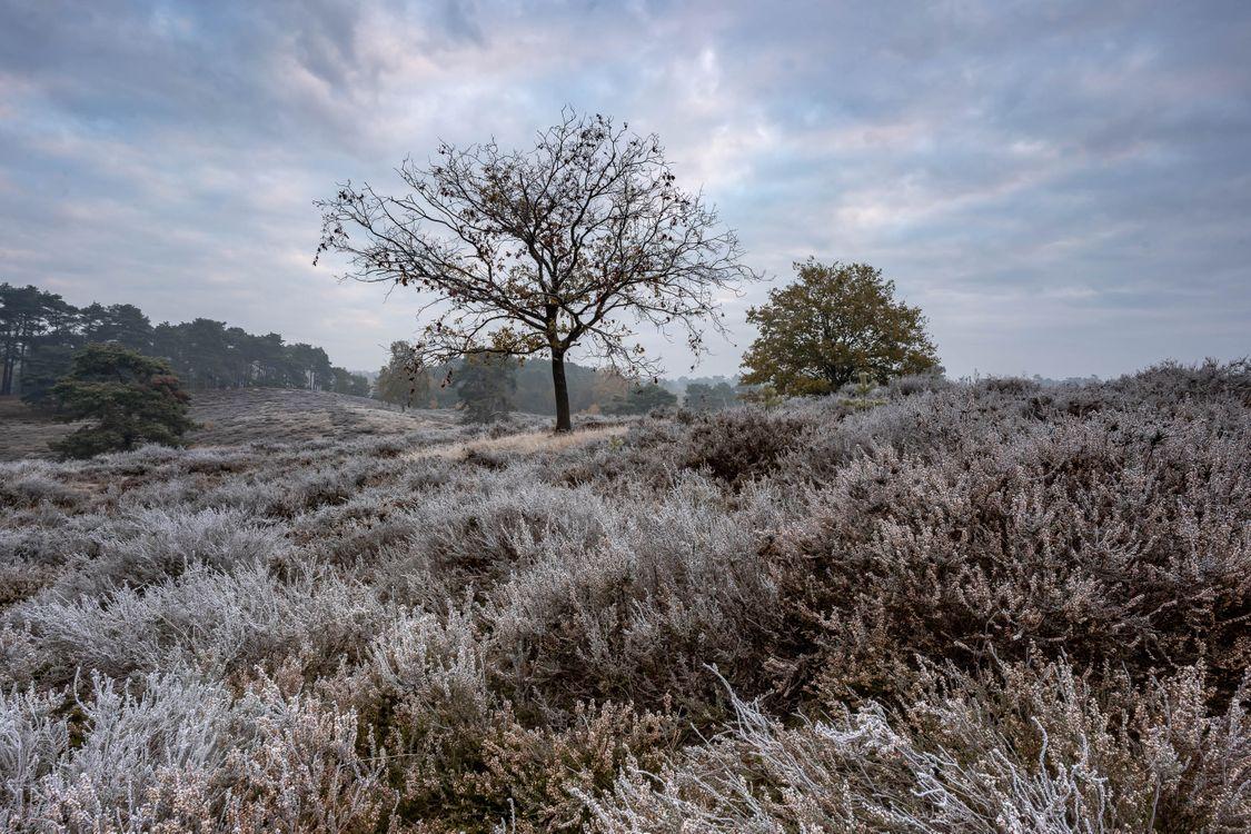 Фото бесплатно трава, поле, мороз - на рабочий стол