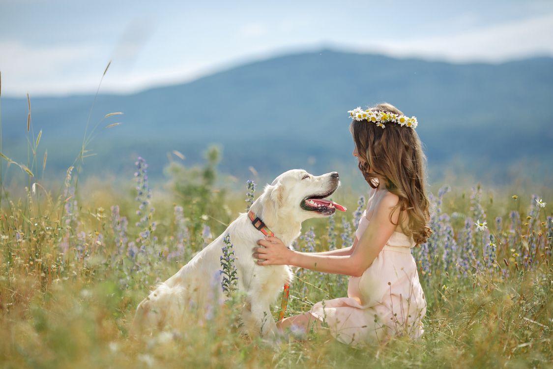 Обои девочка, собака, модель, настроение, пес, ошейник, трава, отдых, лучший друг на телефон   картинки настроения - скачать