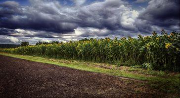 Фото бесплатно пахали поле, закат, поле