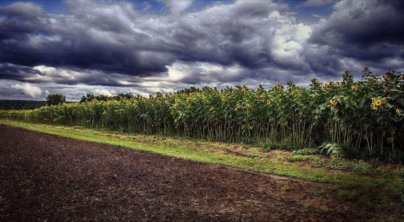 Фото бесплатно пахали поле, закат, поле - на рабочий стол