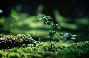 Фото бесплатно росток, дерево, ветка, мох, листья, природа, макро
