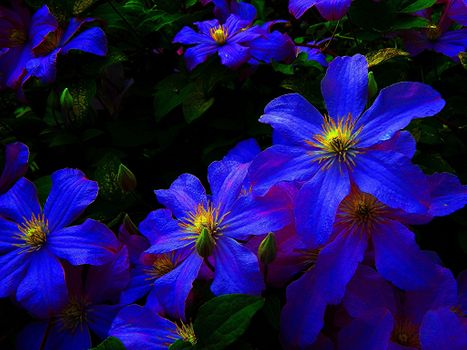 Заставки яркие, цветы, синий