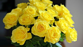 Бесплатные фото букет,розы,желтые,бутоны,лепестки,ваза