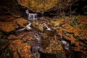 Заставки осенние цветы, лес, осень
