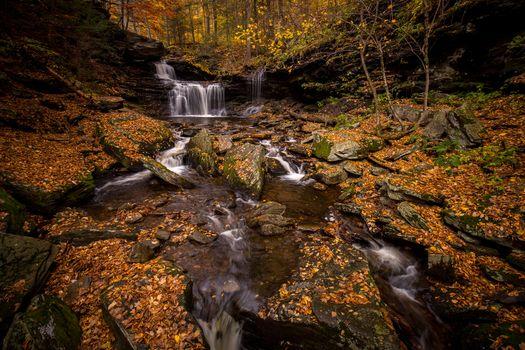 Фото бесплатно осенние цветы, лес, осень
