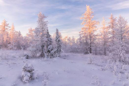 Сугробы снега