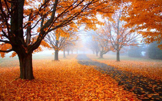Заставки дерево, осень, природа