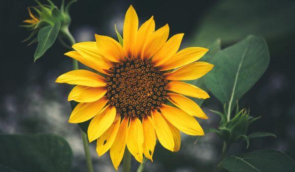 Скачать картинку флора, цветы для рабочего стола бесплатно