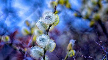 Фото бесплатно весна, верба, куст